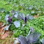 Δημιουργία λαχανόκηπου