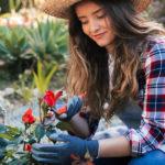 Φροντίδα των φυτών τον Χειμώνα
