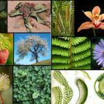 Γενικές Πληροφορίες για τα Φυτά