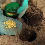 Η ανάπτυξη των φυτών - Λιπάσματα