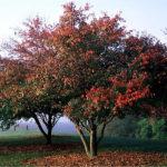 Φυλλοβόλα δένδρα